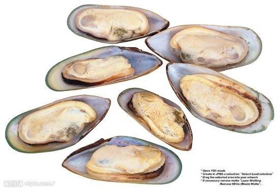 牡蛎是单壳软体动物么