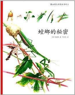 蒲公英秘密绘本系列:自然的螳螂观摩公开课试反思后教课图片