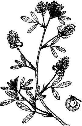 小麦茎叶与花序结构图