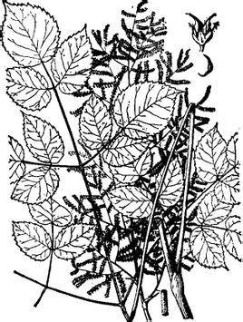简笔画 设计 矢量 矢量图 手绘 素材 线稿 268_355 竖版 竖屏