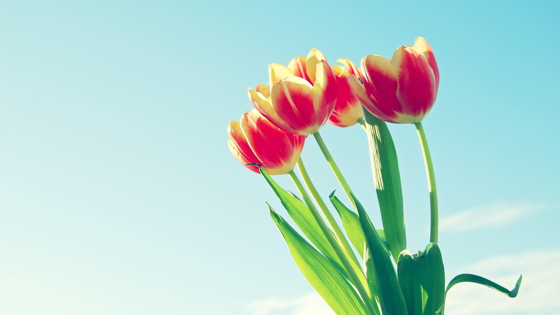 植物花卉高清電腦壁紙_360社區