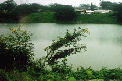 武汉东湖绿地风景