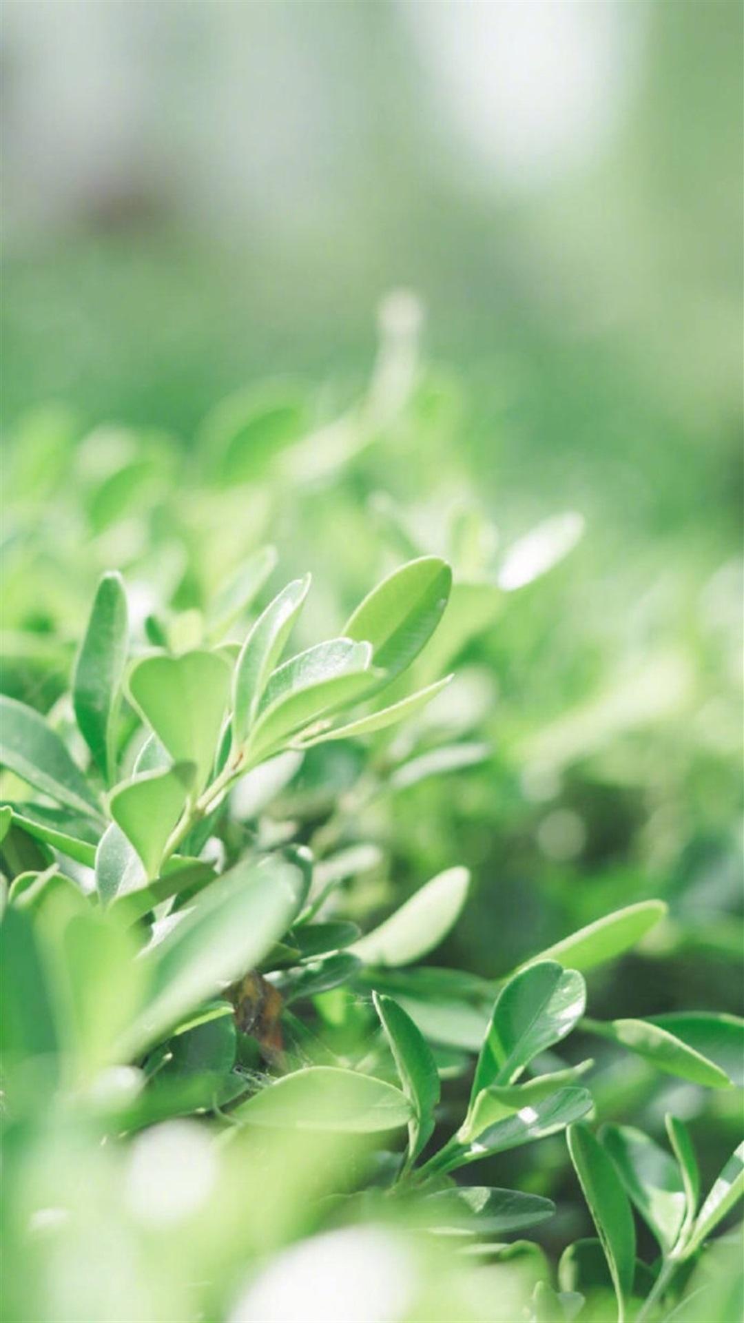 清新护眼绿色植物手机壁纸_360社区