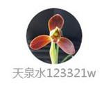 天泉水.jpg