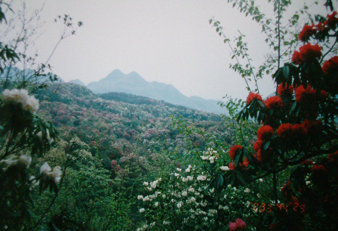 百里杜鹃国家森林公园