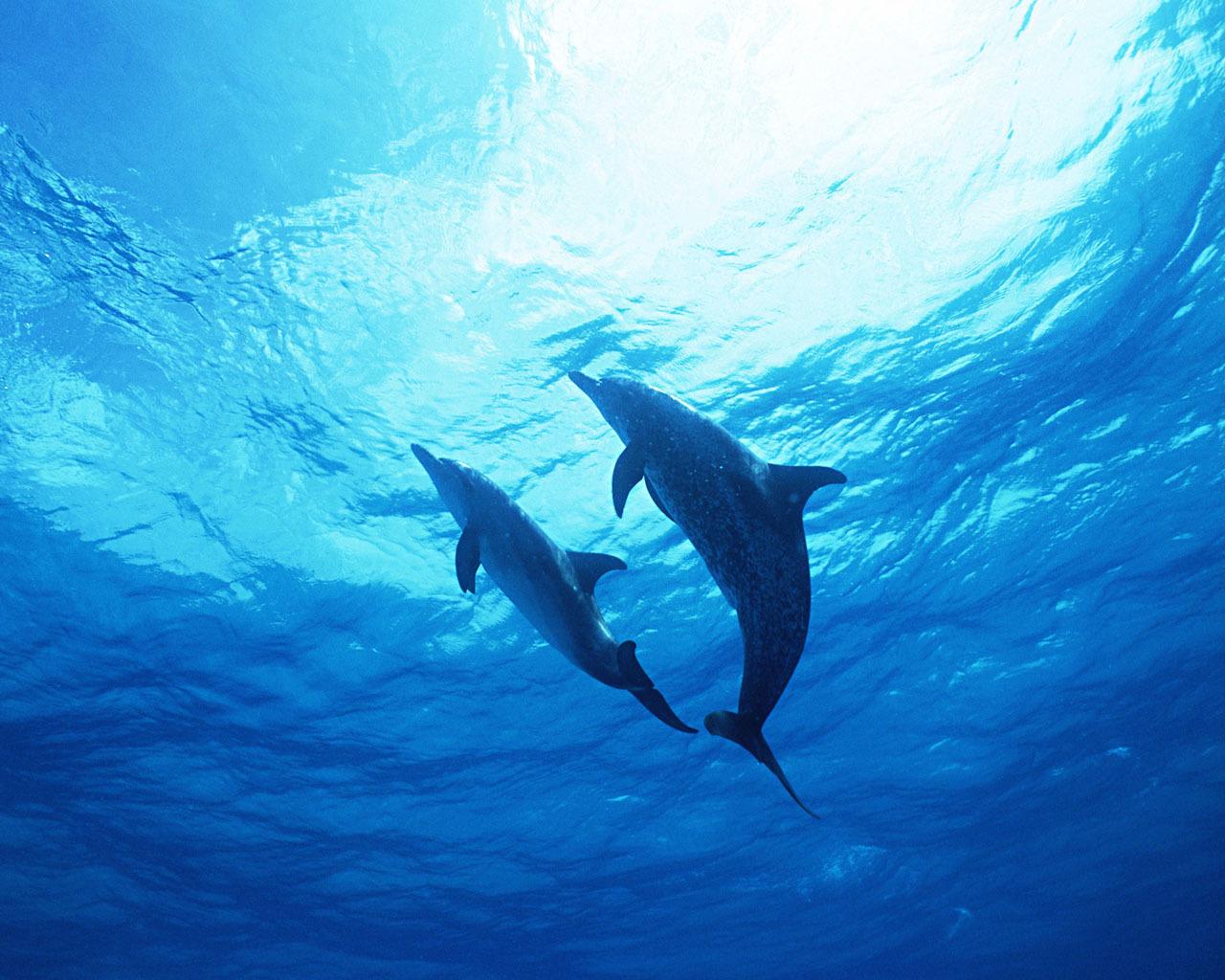 海豚动物画画大全