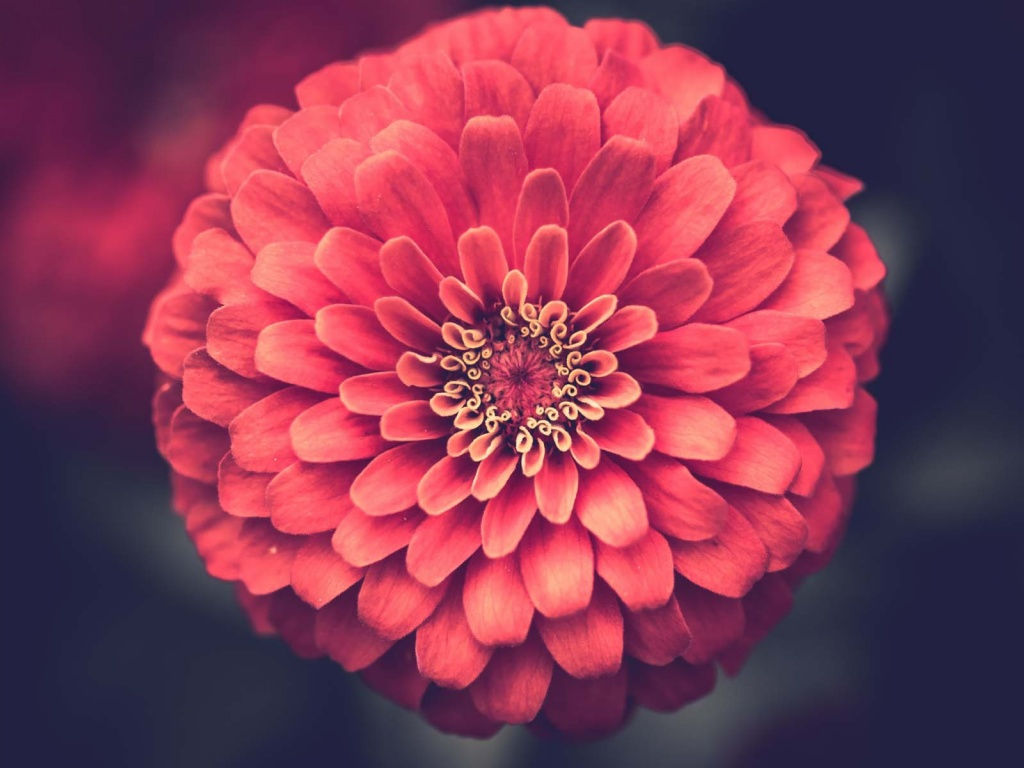 小清新植物花卉桌面壁纸