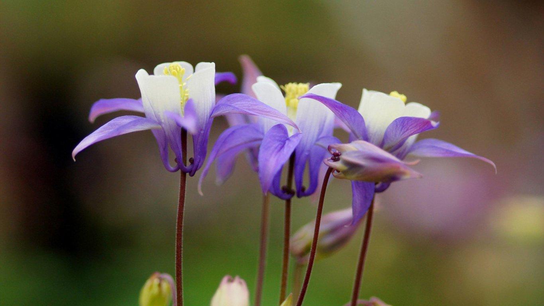 护眼清爽花卉植物高清桌面壁纸