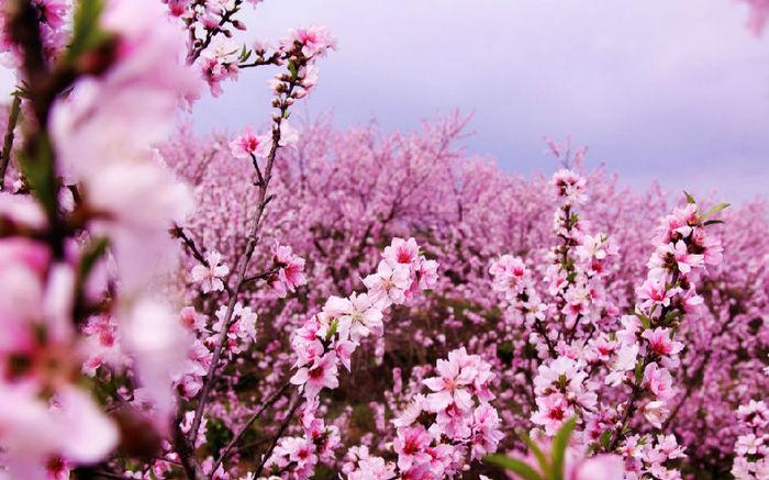 赏桃花,走桃花运——春天来了,和360手机春游吧