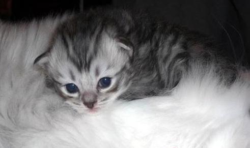 猫一般喜欢吃什么 猫咪口味不一