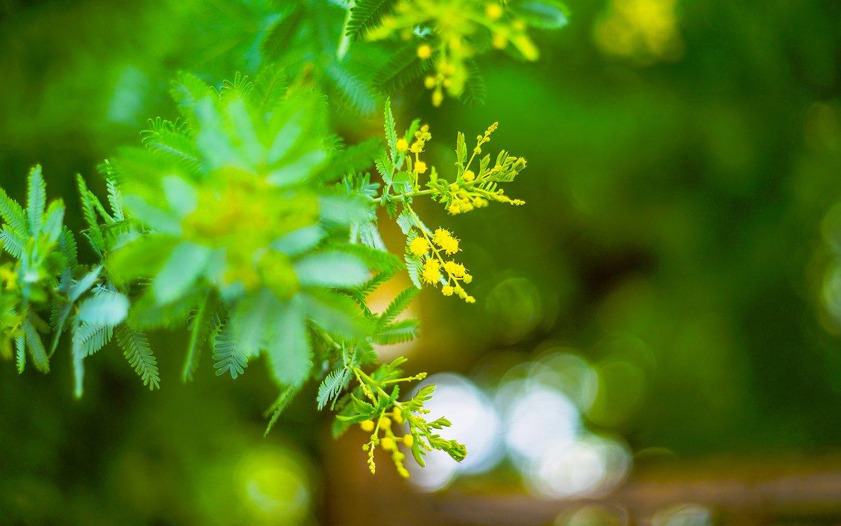 小清新植物花草桌面壁纸